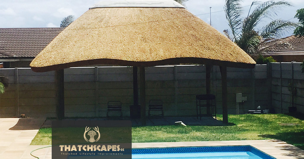 Thatched Lapa Protea Hoogte
